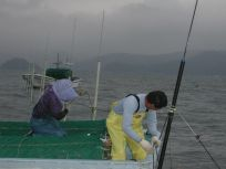 05101531海苔網を張る高さにもこだわりが