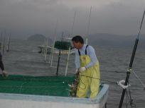 05101532海苔網を張るのは