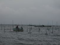 05101538こんなに広いところで海苔網を張るのさ