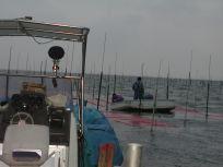 05101539支柱に支えられて海苔網が