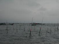 05101540だんだん海苔網が張られてます