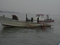 05101542海苔の為に海を清掃中