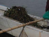 05101543おいしい海苔を作る為1