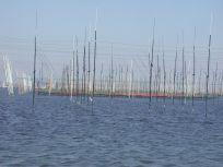05101706壱キロ四方に張ってある海苔網.jpg
