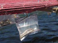 05101709海苔網の下のこれはなんでしょう