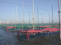 05101711海苔網の下の不思議