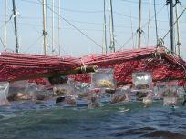 05101712美味しい海苔網の下には種がある