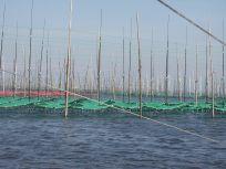 05101713海苔網たちがたくさん並んでいます