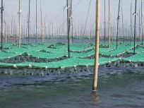 05101715海苔網が空中に浮いてます