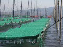 05101716へ~海苔網って長いですね