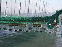 05101717この海苔網にもたくさん種がついてます