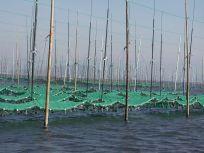 05101728まさに美味しい海苔を作る畑ですね