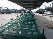 海苔網の仕込みは手作業なんです。暑い真夏の空の下、暑さに耐えながらの大変な作業です