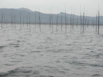 海苔網ちゃんたちは元気に育っているのかな?