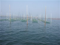 場所は変わって海苔網ちゃんのお出ましです。