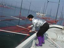 藤森組合長も海苔網を手にとって何かごらんになってます。