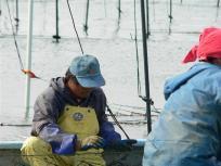 たくさんある海苔網を一枚一枚手作業です