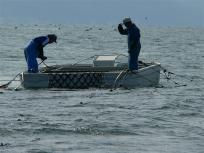 美味しい熊本海苔ナギサを楽しみにしています