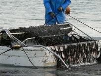 箱舟の中は美味しい海苔たちで一杯でしょうね