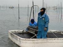たくさんの海苔で箱舟も沈んでいます^^