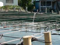 P1050428美味しい海苔を作るために海から海水をひいているのそうです