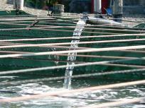 P1050429良質な海水も美味しい熊本海苔には必要なんですね。