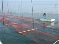 P1090002海苔のプロたちが毎日毎日朝から晩まで寝る暇も惜しんで