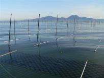 P1090003一生懸命育てられてます。そんな海苔のプロの頑張りと大自然の恵みで