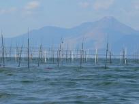 美味しい熊本海苔には阿蘇山の恵みがいっぱい
