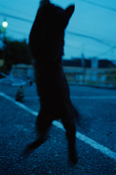 cat_001.jpg