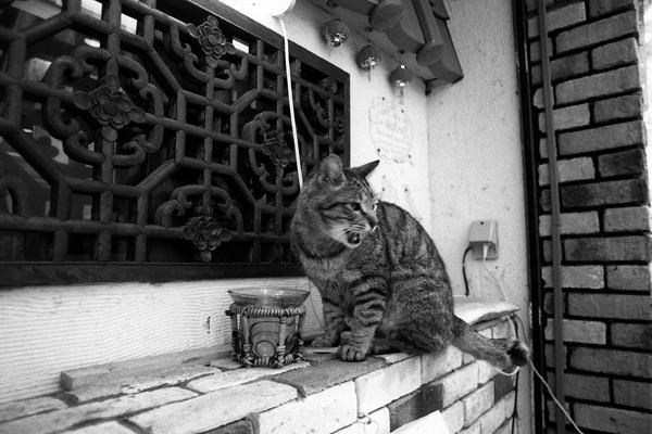 cat_0010.jpg