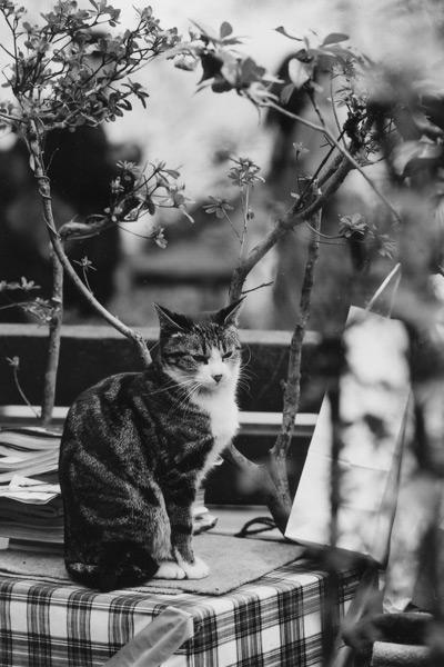 cat_0011.jpg