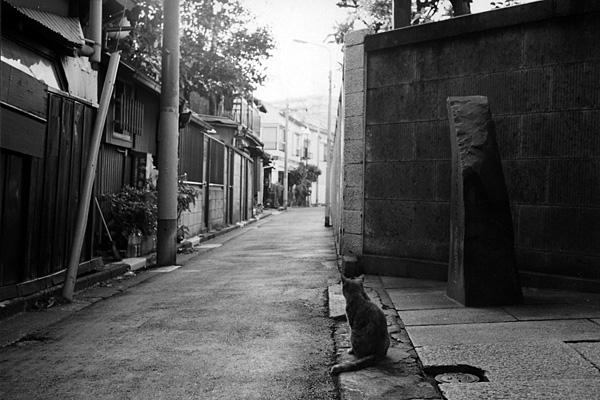 cat_0012.jpg
