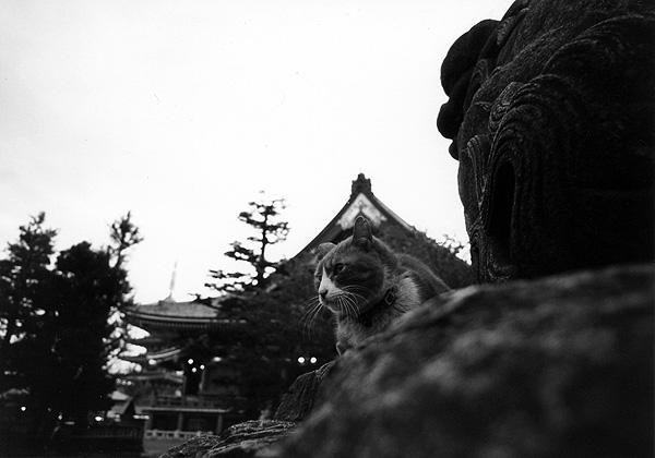 cat_0013.jpg