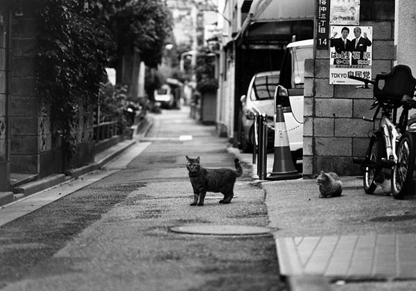 cat_0014.jpg