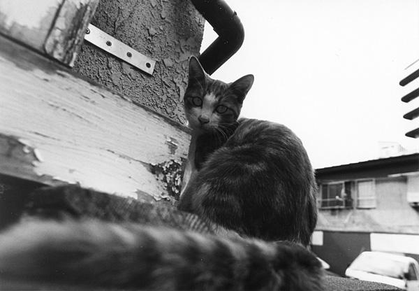 cat_0015.jpg