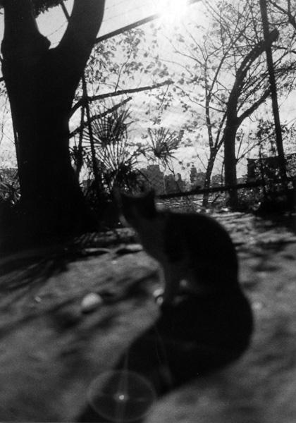 cat_0016.jpg