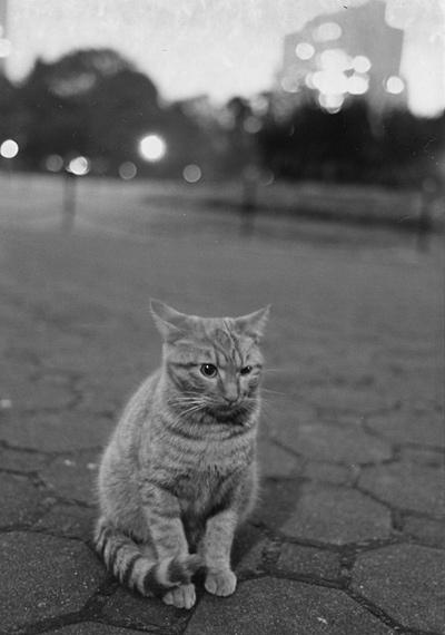 cat_0017.jpg