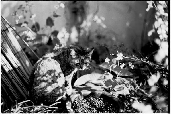 cat_008.jpg
