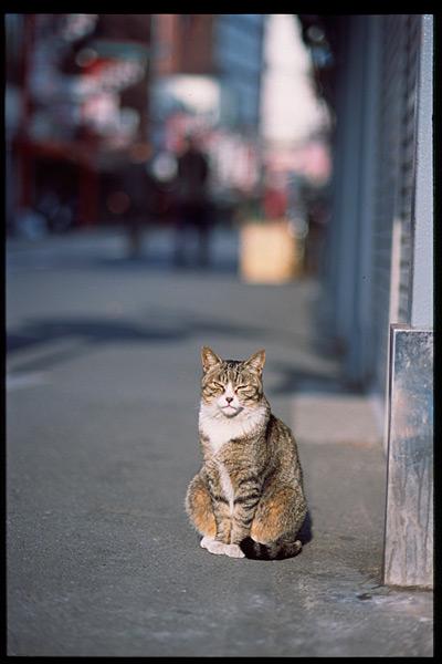 cat_014.jpg