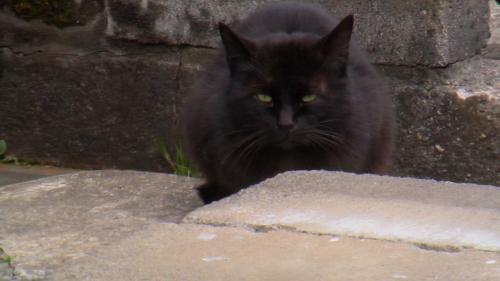 黒猫睨み大