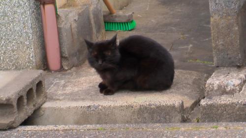黒猫寝横1