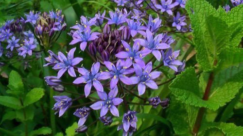 21526紫小花