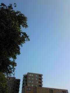 blueImage539.jpg