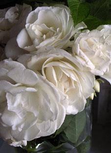 10528陽子薔薇4