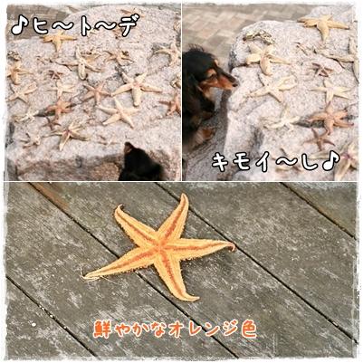 2_20090513040212.jpg