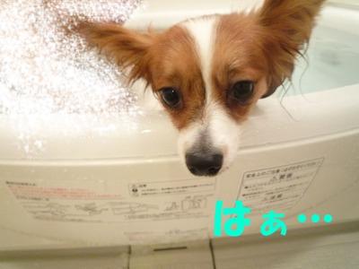 里帰り前お風呂②