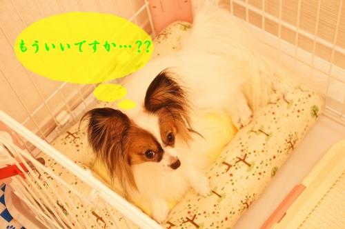 サークル用ベッド③