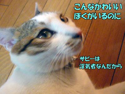090308_09.jpg