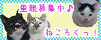 1_5.jpg